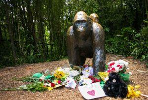 Harambe-gorilla-553875